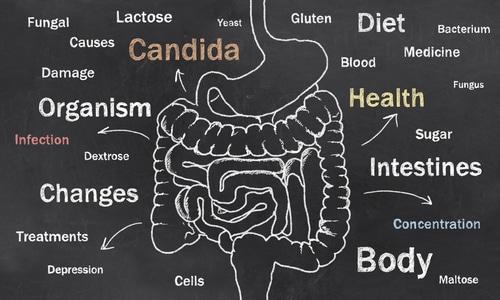 Soor gehört zur Gattung der Candida und kann am Penis entstehen