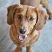 CBD für Hunde & Haustiere