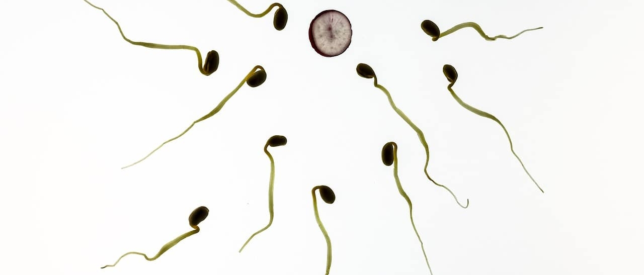 Klumpiges Sperma